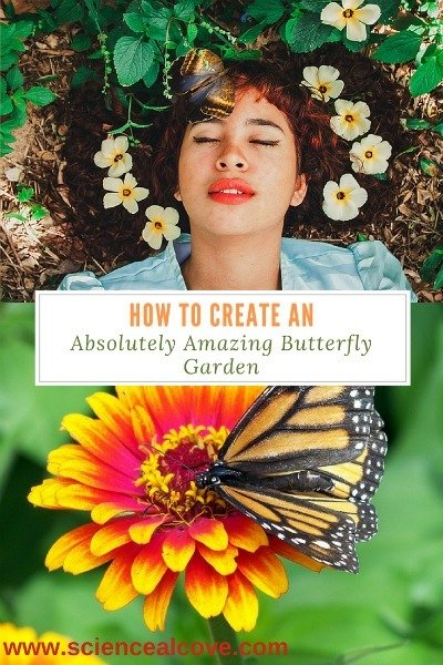 How to Create an Absolutely Amazing Butterfly Garden - https://sciencealcove.com/2017/05/create-butterfly-garden/