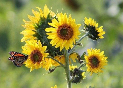 How to Create an Absolutely Amazing Butterfly Garden