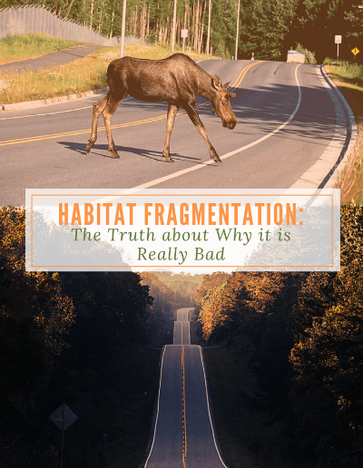 Habitat Fragmentation: The Truth About Why it is Really Bad- http://sciencealcove.com/2017/06/habitat-fragmentation-bad/