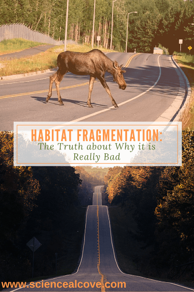 Habitat Fragmentation: The Truth about Why it is Really Bad