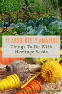 41 Absolutely Amazing Things To Do With Heritage Seeds-http://sciencealcove.com/2018/01/things-to-do-with-heritage-seeds/