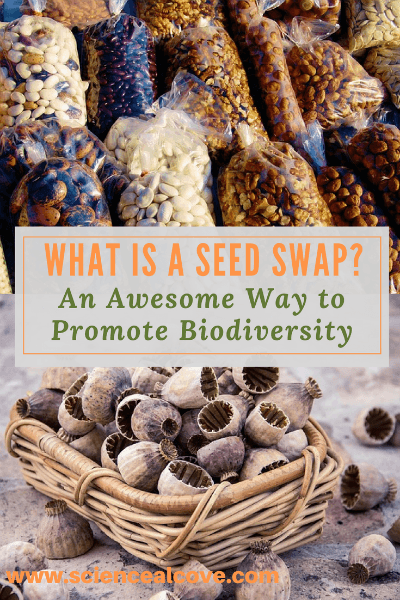 What is a seed swap? It is a fabulous way to encourage biodiversity and build community relationships in your pocket of the world. Hosting a seed swap is like hosting any other party or event. Organization is key. Note: This post contains affiliate links. #seeds #seedswap #biodiversity #affiliatelinks