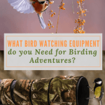 What Bird Watching Equipment do you Need for Birding Adventures?
