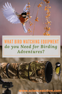 What Bird Watching Equipment do you Need for Birding Adventures-https://sciencealcove.com/2018/02/what-bird-watching-equipment-do-you-need/
