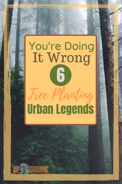 Tree planting is an expensive proposition. Check out these 6 urban legends and make sure you're not doing it wrong. Plant your tree right the first time. #treeplanting #howtoplanttrees #treescience