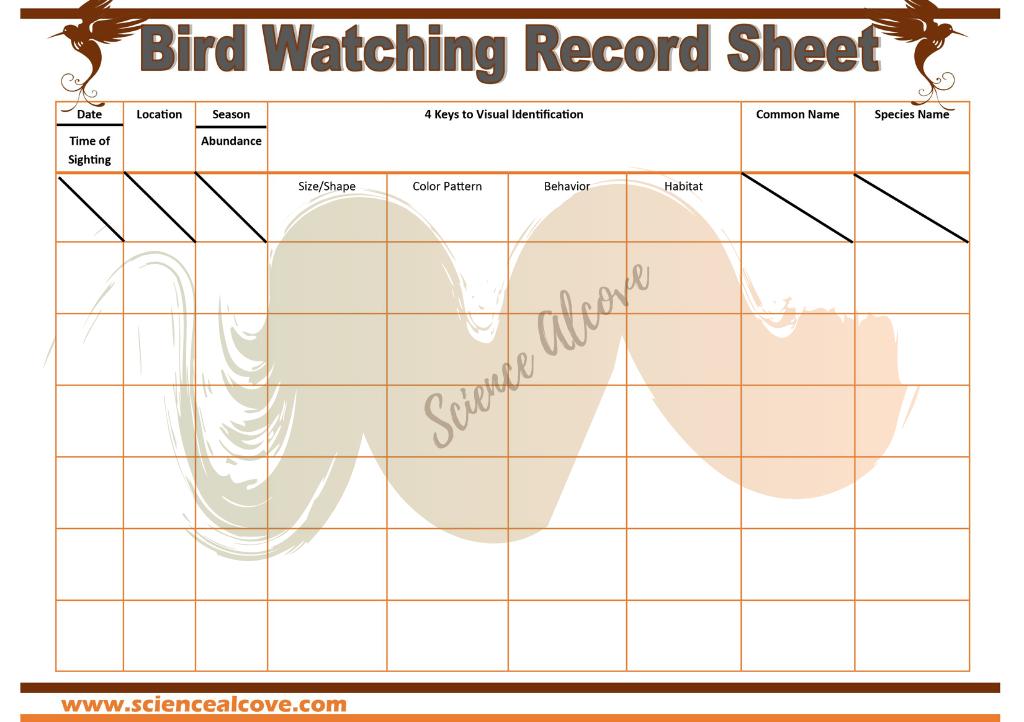 Bird watching record sheet for science journaling
