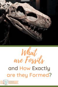 dinosaur skull-what are fossils
