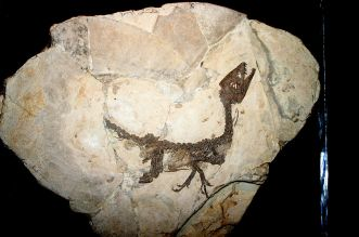 Scipionyx samniticus By Giovanni Dall'Orto, via Wikimedia Commons