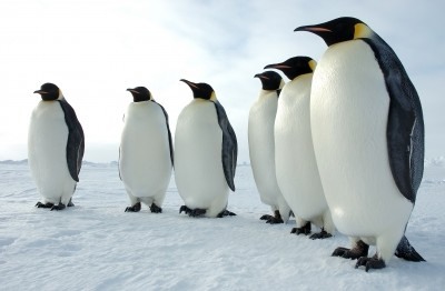 Distinct avian influenza viruses found in Antarctic penguins