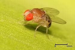 'Breaking Bad': Insect pests in the making
