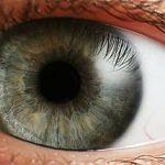 320px-Eye_iris