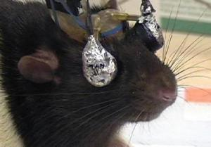 pavlov's rat googles