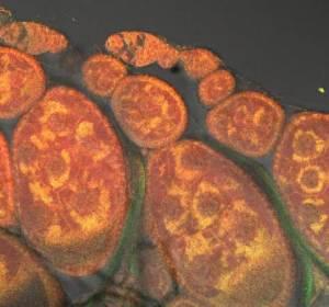 Mitochondria2