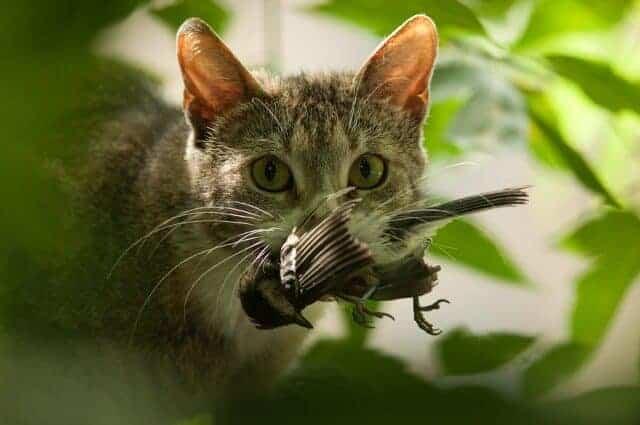 It's a Cat-Eat-Bird World