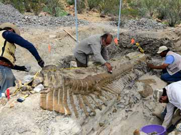 Paleontologists uncover pristine dinosaur tail in Mexico