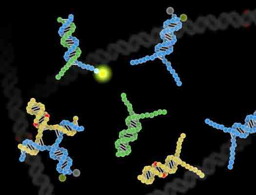 New technique maps life's effects on our DNA