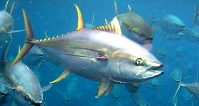 Extinction, overfishing threats can be predicted decades before population declines