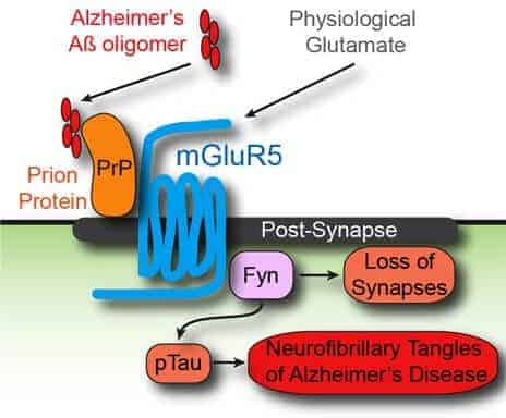 Alzheimer's missing link found: Is a promising target for new drugs