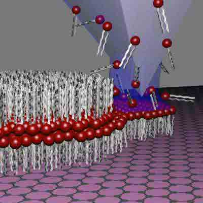 Direct 'writing' of artificial cell membranes on graphene