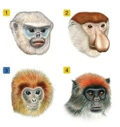Biologists find an evolutionary Facebook for monkeys and apes