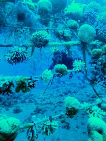 Smell of the Sea Homes In On Stressed Coral