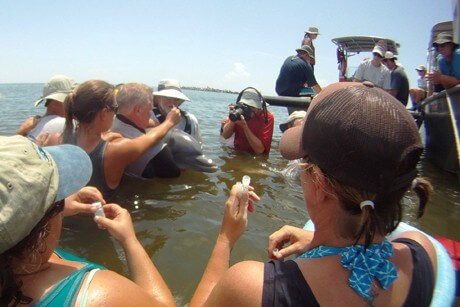 Poor dolphin health tied to Gulf oil spill