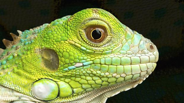 The Reptile Database