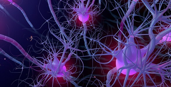 In the brain, the number of neurons in a network may not matter