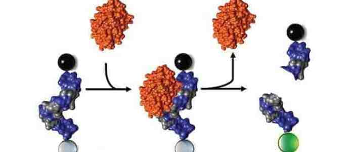 A quicker, cheaper way to detect staph in the body