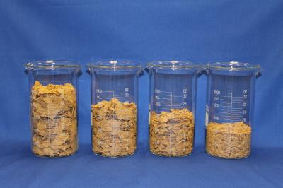 Cereal flake size influences calorie intake