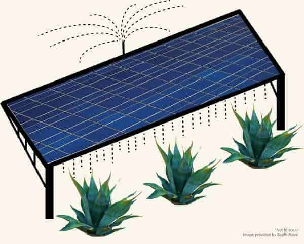 Growing crops on solar farms: Scientists model a win-win situation