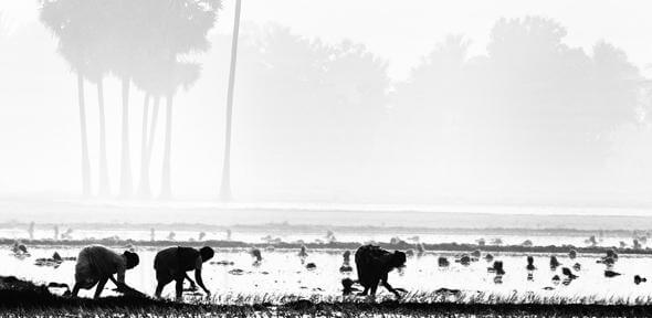New evidence of suicide epidemic among India's marginalised farmers