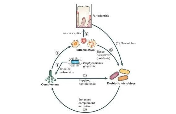 Promising approach to fighting gum disease