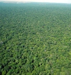 Rate of deforestation in Brazilian Amazon has declined