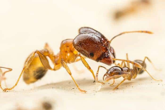 Scientists shrink ants to study mechanisms that control DNA expression