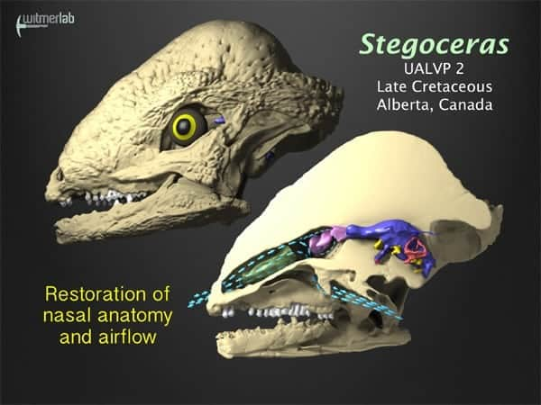 Dinosaur noses enhanced smelling and cooled brain