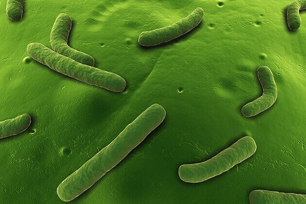 'Smart' bacteria remodel their genes to infect our intestines