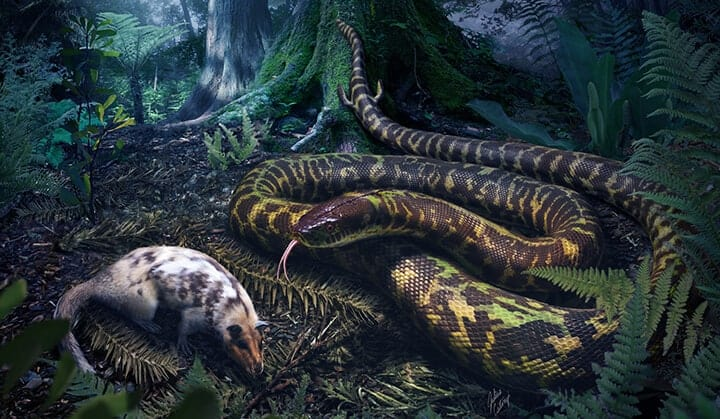 Ancient snakes — a new hiss-tory