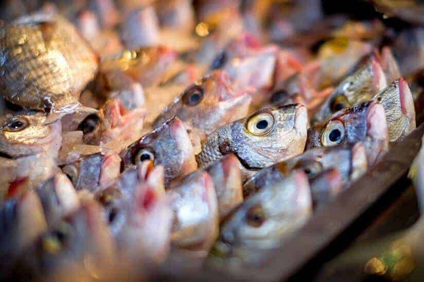 Something's literally fishy: Study finds fish smell makes us suspicious