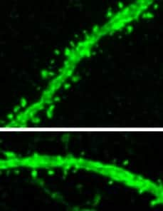 Lifelong learning is made possible by recycling of histones