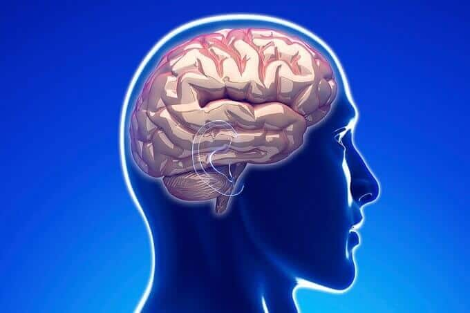 Brain plasticity: How adult-born neurons get wired-in