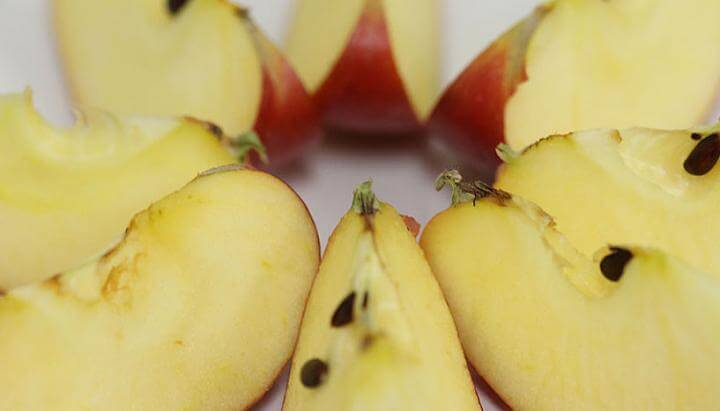 Diet rich in apples and tomatoes may help repair lungs of ex-smokers, study suggests