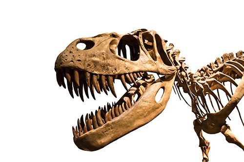 Unlocking the Secrets of T-Rex's Tiny Arms