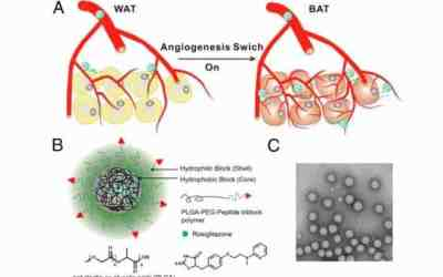 Fat-fighting nanoparticles
