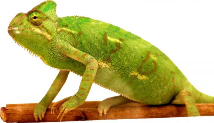 'Political chameleons' conform to avoid discomfort