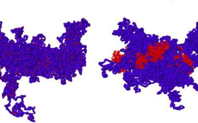 The large-scale stability of chromosomes