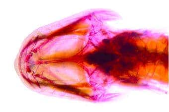 Mexican Cavefish Identified as First of its Kind in W. Hemisphere