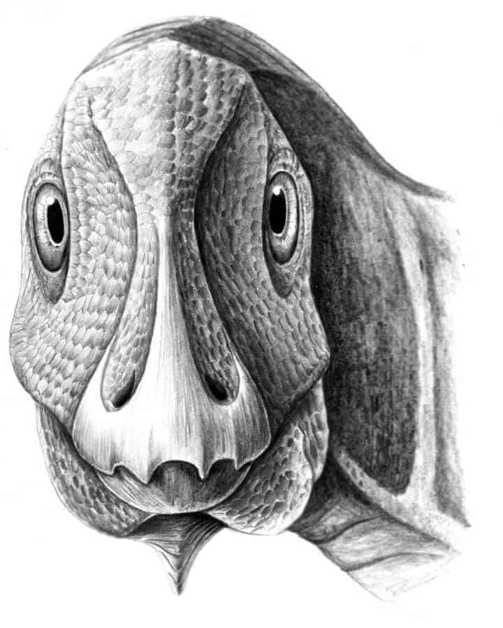 First fossil facial tumour found in dwarf, duck-billed dinosaur from Transylvania