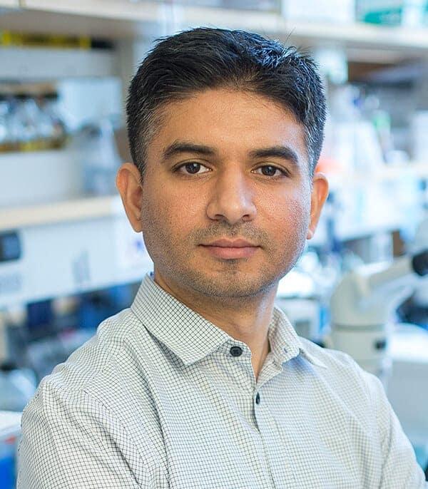 Male-harming DNA mutation reinforces 'mother's curse' hypothesis
