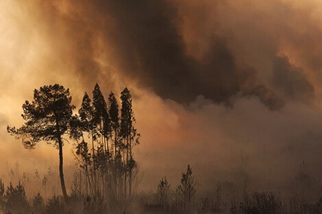 Indonesian fires exposed 69 million to 'killer haze'